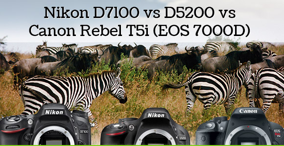 Buffaloes and zebras wildlife photo with three cameras