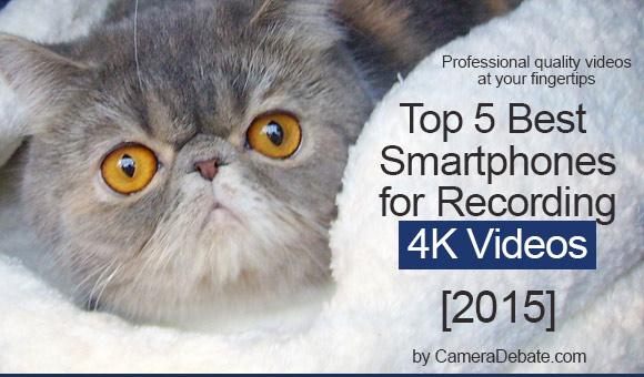 Cute cat 4K banner