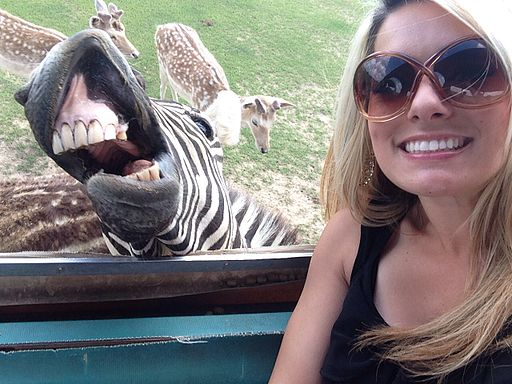 Zebra and a woman taking a selfie in the zoo